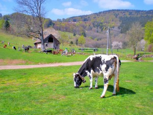 Vosges © French Moments