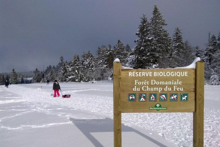 La forêt du Champ du Feu en hiver © Psychoslave - licence [CC BY-SA 3.0] from Wikimedia Commons