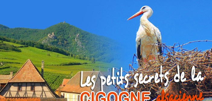 Les petits secrets de la Cigogne alsacienne © French Moments
