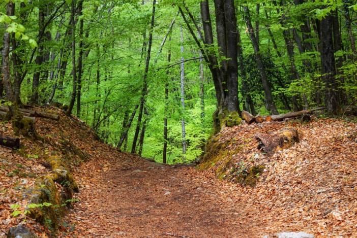 Chemin dans la forêt du roc de Chère © French Moments