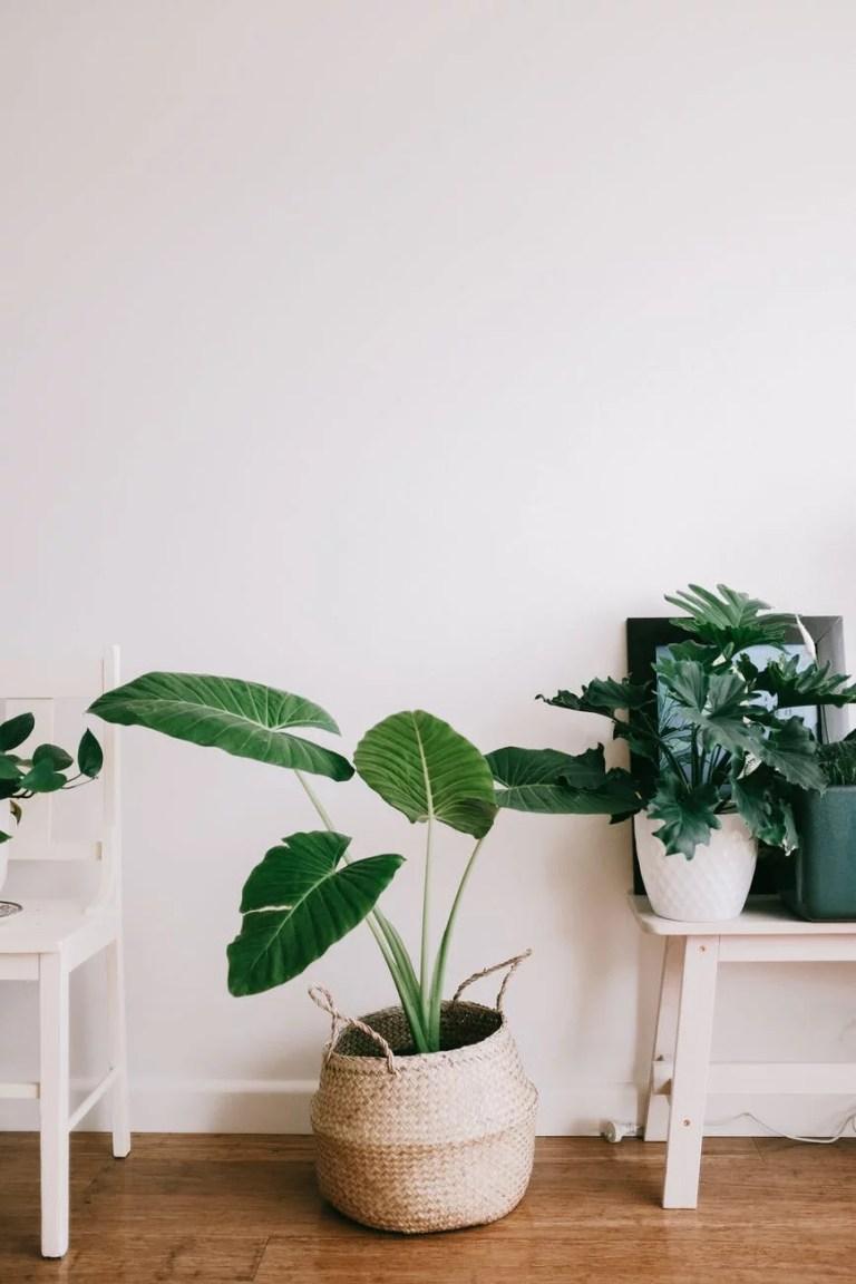 Aménager son jardin intérieur