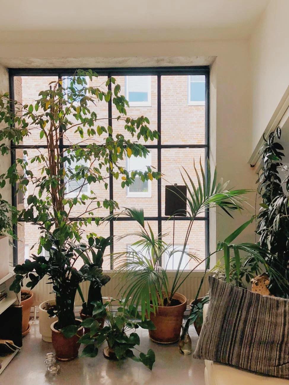 Variété de plantes à feuilles vertes sur la table en face de la fenêtre