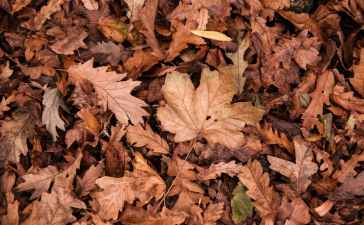 Automne feuilles mortes