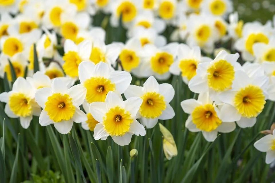 Inspiration pour un jardin jaune