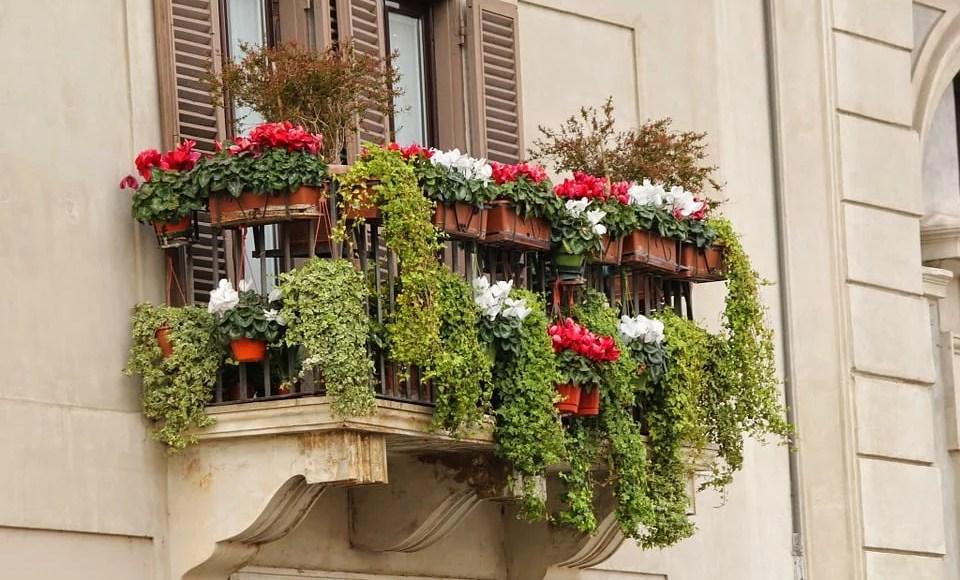 Entretenir ses plantes sur un balcon
