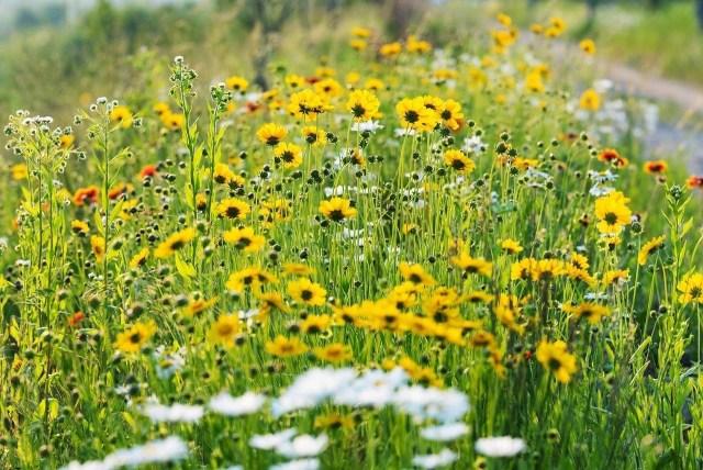 Que faire au jardin en juillet ?