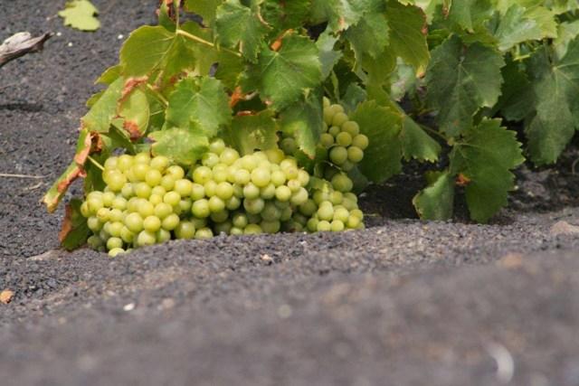 la geria lanzarote volcanic vineyard 4