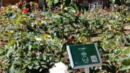 La Rosa e le sue pregiate varietà nel Roseto Principessa Grace di Monaco