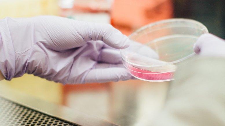 Cancro al Rene Metastatico: Accordo di Collaborazione per un Progetto di Ricerca tra il Centro Scientifico di Monaco e la Helsinn