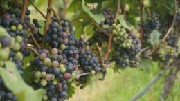 I piaceri della Tavola e del Vino nell'Antichità, nelle Giornate Europee del Patrimonio a Ventimiglia