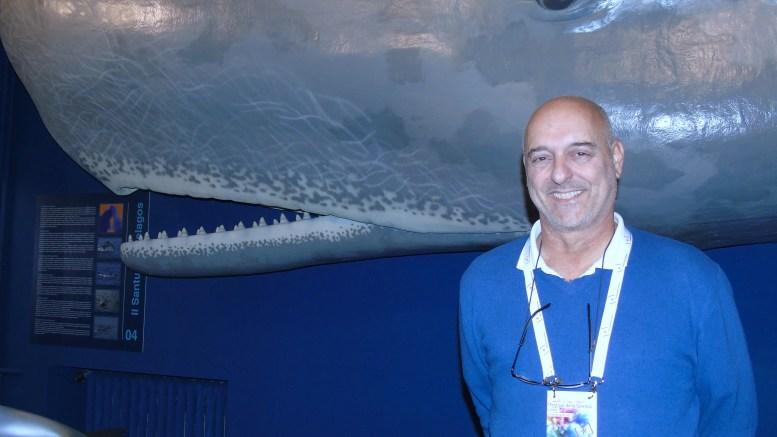 Il Capodoglio Salvatore, Star del Museo Doria di Genova, Piace Anche ai Turisti d'Oltralpe