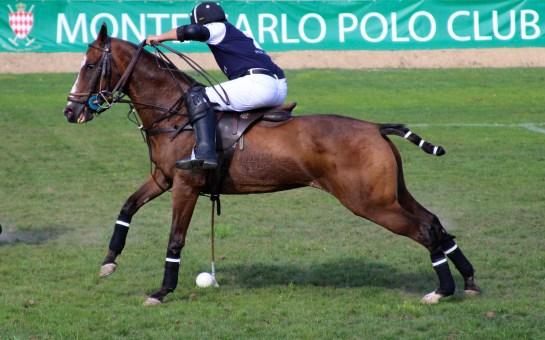 Handsome Poney at Monte-Carlo Polo Club tournament @CelinaLafuentedeLavotha2014