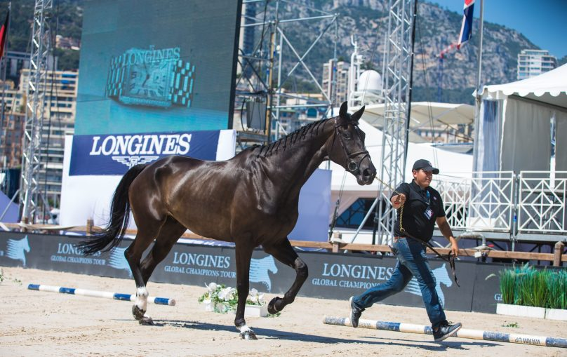 Taking the stallion for a gallop during Veterinary visit at LGCTM @RBpresse