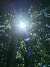 The sun through the Oak trees at Villa Gallici@CelinaLafuenteDeLavotha