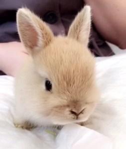 Bunny Cafe in Tokyo