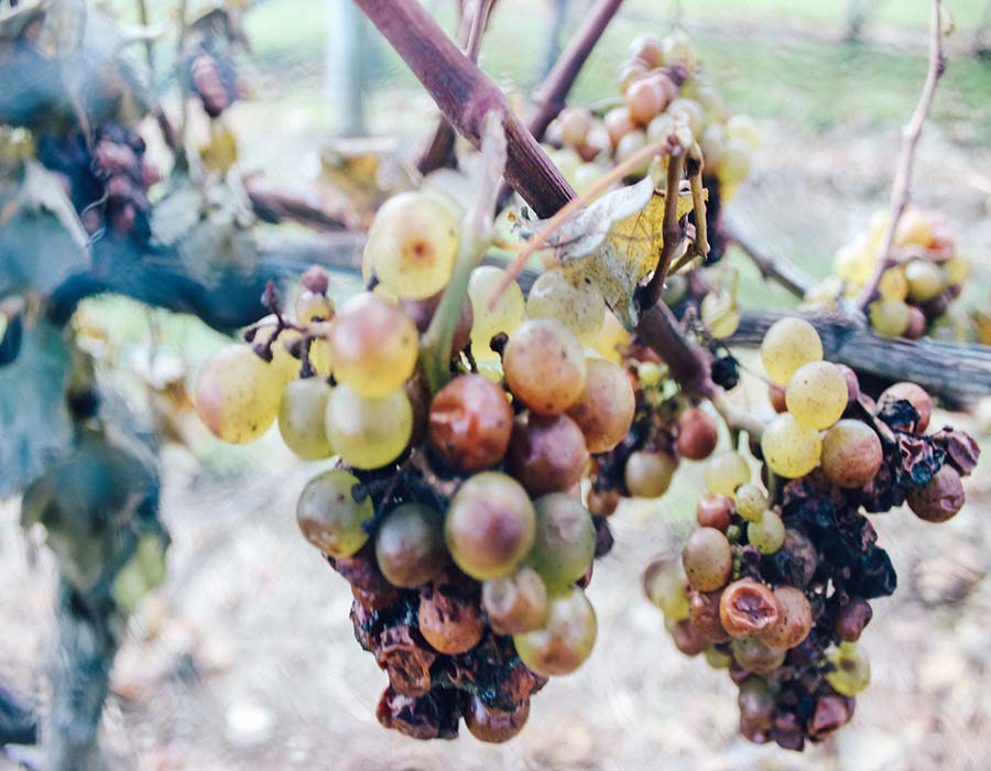 unique wineries in napa.JPG