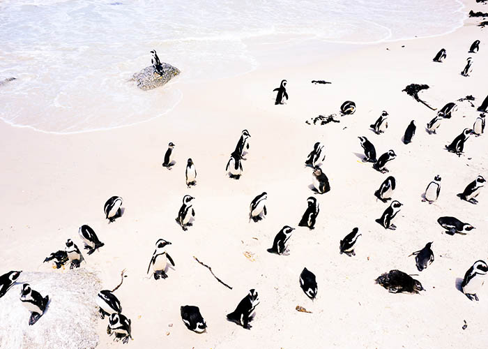 cape town penguin beach.jpeg
