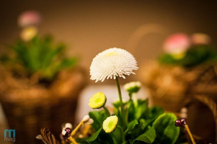 kwiaty_7963