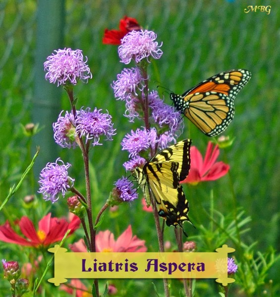 butterfly garden plants flowers Butterfly Plants List- Butterfly Flowers and Host Plant Ideas