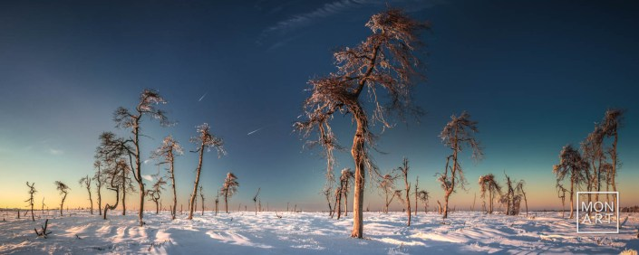 Noir Flohay im Winter
