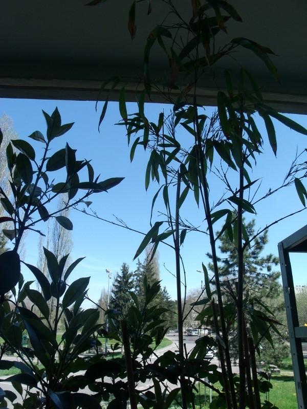 L 39 Ann E 2013 Sur Votre Blog Balcon Terrasse Petit Jardin En Pot Sur Le Balcon