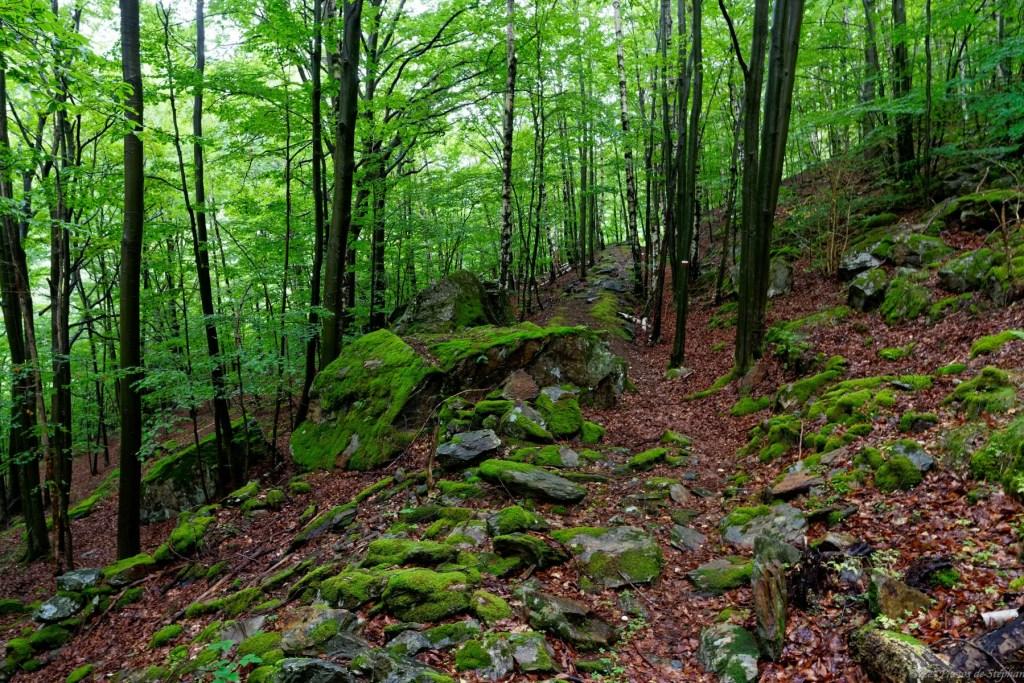 Forêt avant Artiès