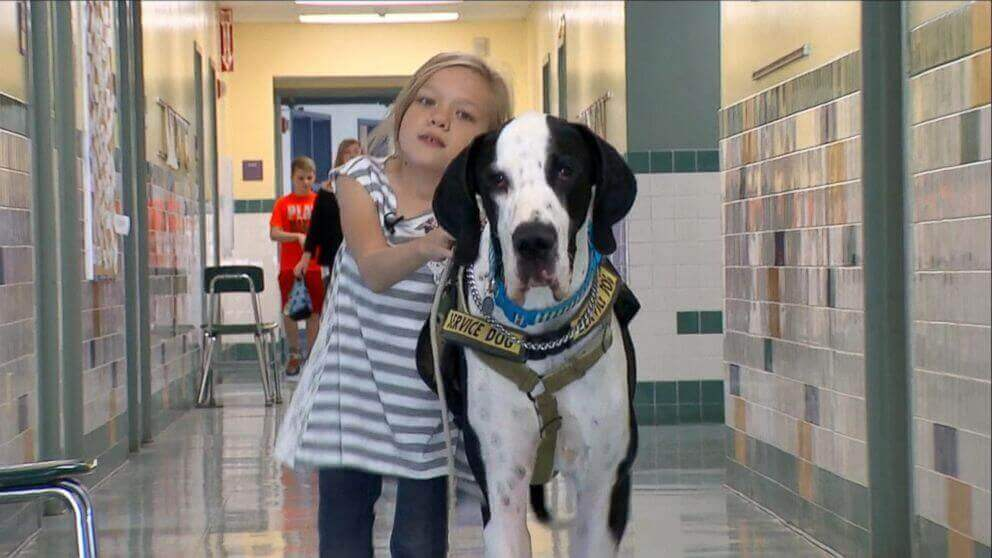 La merveilleuse histoire de Bella, 10 ans et de son chien, aide d'enfants handicapés, George