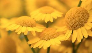 goethe-psychologie-des-couleurs-emotion-jaune-mon-carre-de-sable