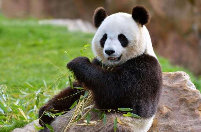 12 techniques utiles de manipulation de données avec la librairie Pandas