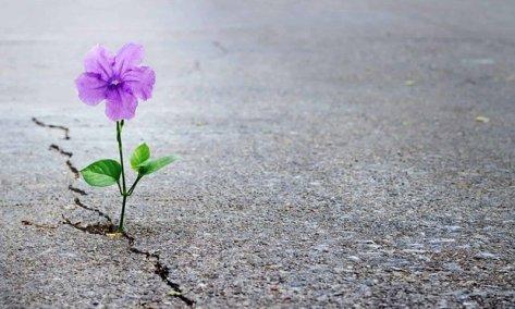 fleur résiliente