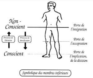 Schéma - Symbolique des membres inférieurs