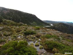 Tarn Shelf - Mt Field