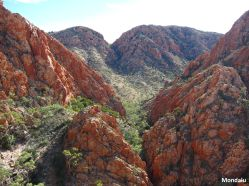 Larapinta Trail - Standley Chasm