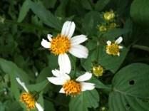 Bunga Semak