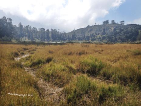 Lapangan rumput wlingi