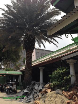 Masjid An Nawier Pekojan