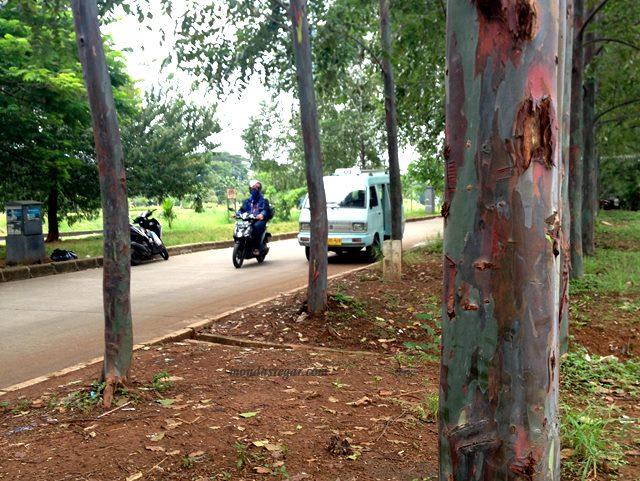 Pohon Pelangi BKT