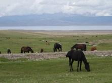 Horses graze near Song-Kul