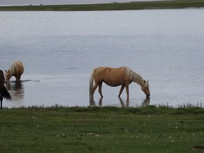 A horse bathes in the lake