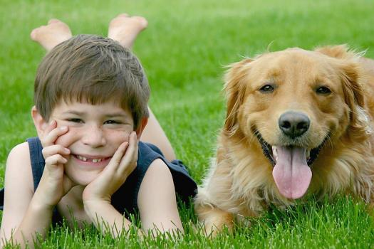 Grandchildren will love dogs as pets
