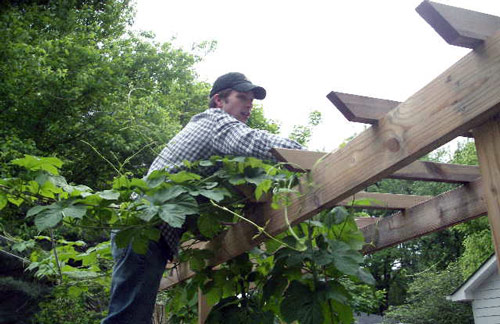 jeff-hops-ladder