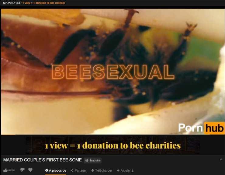 Pornhub Beesexual