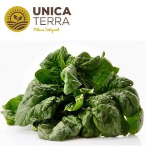 spinaci UT