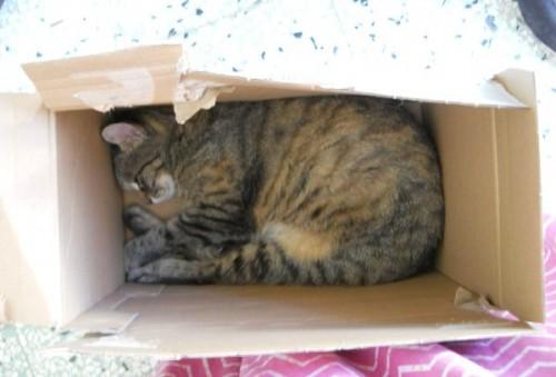 gatto,gatti,scatole