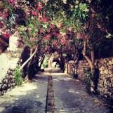 Spring flowers in medieval Byblos