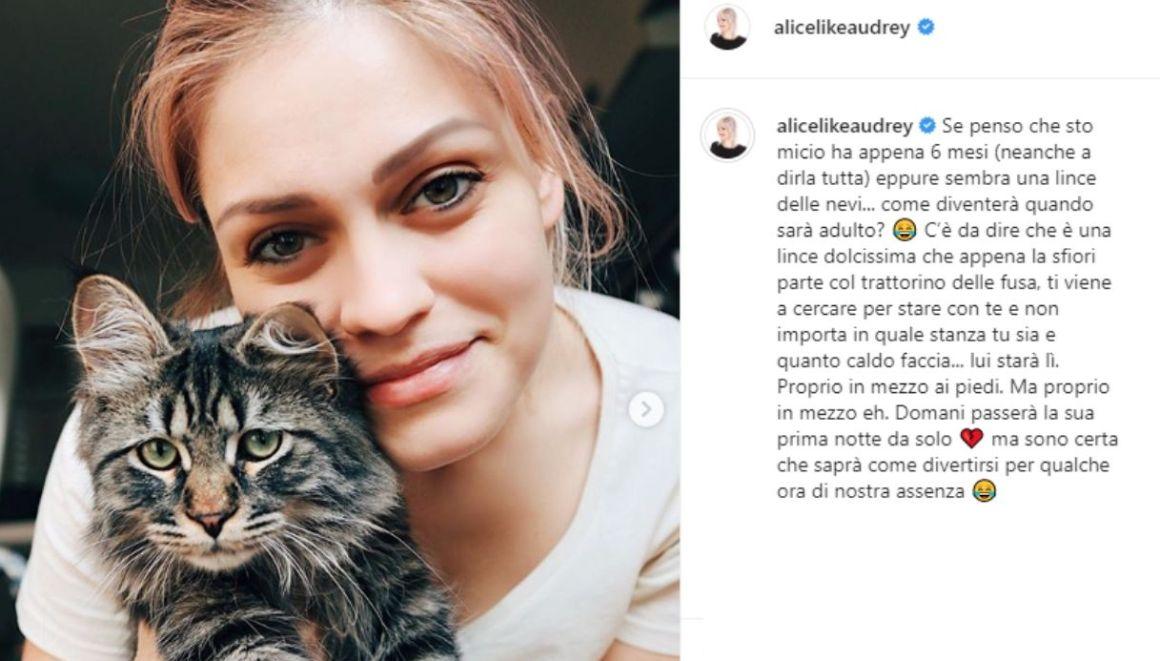 Alice Venturi