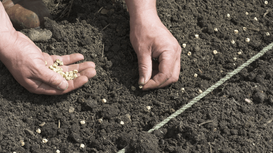 Sorry gardeners, you can't buy foreign seeds on Amazon anymore