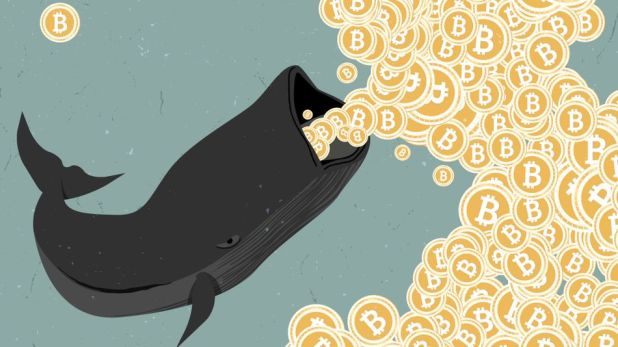 Blockchain: Whales are at play.