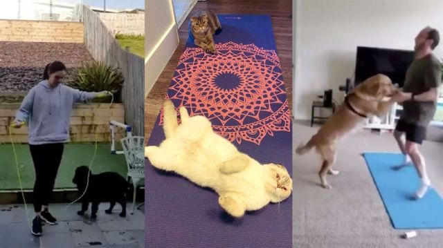 Dogs and cats are refusing to let their humans work out at home, and it's pretty hilarious
