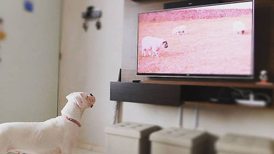 How much would you pay for a streaming service for your dog?